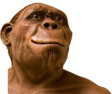 Maropeng's 'spokesperson' and only tweeting hominid, Harry. Follow him - @harrythehominid or facebook.com/harry.hominid.