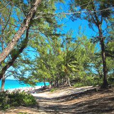 Cabbage Beach on Paradise Island in Nassau, Bahamas. We walked up the path and once at the top the view was just like this. I was mesmerized when I saw that beautiful, turquoise water!!