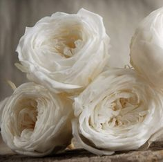 28.00 SALE PRICE! Bring an elegant touch to your cloudy bouquets or dreamy wedding ceremony with these crisp blossoms. The Soft White Preserved Rose Heads co...