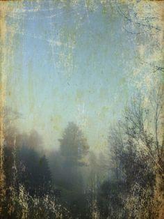 Fog 1 Seth Apter