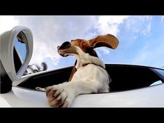 GoPro: The Dog and The Porsche - YouTube AWESOME VIDEO!!