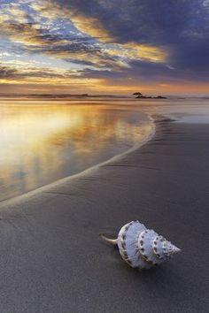 : Shell | Aaron Pryor                                                                                                                                                                                 Más