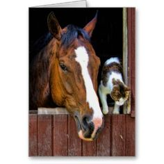 Horse and Cat Greeting Card ~ this and many more designs at http://www.haihorsie.com/greetingcard.shtml