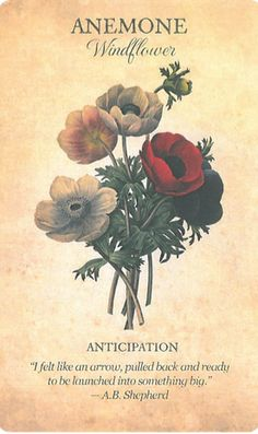 Botanical Inspiration- Coming soon! Botanical Inspiration- Coming soon! Botanical Flowers, Flowers Nature, Botanical Art, Botanical Illustration, Flower Meanings, Language Of Flowers, Flower Quotes, Garden Inspiration, Planting Flowers