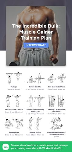 The Incredible Bulk: Muscle Gainer · WorkoutLabs Fit Fitness Workouts, Lifting Workouts, Gym Workout Tips, Chest Workouts, Fun Workouts, Bulk Muscle, Build Muscle Fast, Bicep And Tricep Workout, Belly Fat Diet Plan