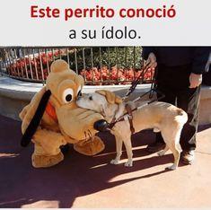 #memes #chistes #humor #funny #invequa #perro #perros Memes en español, memes de perros. Memes.