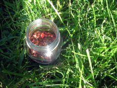 Taurus Tea from Solstice Brews