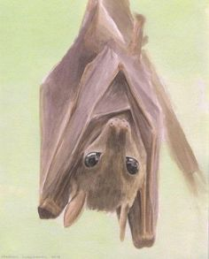 watercolor bat - Google Search