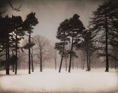 Stadtwald (Urban Forest), 1938, August Sander.