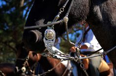 DELIA HERNÁNDEZ/Introspecciones...: Resultados de la búsqueda de caballos