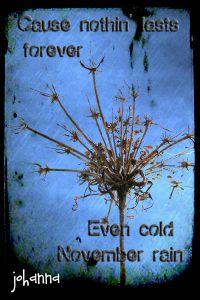 guns n' roses - november rain Lyrics To Live By, Me Too Lyrics, Song Lyric Quotes, Music Lyrics, Guns N Roses, Saddest Songs, Best Songs, November Rain, Postcard Art