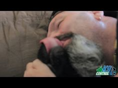 Labrador Retriever, Rescue Dog, Donovan Pinscher, Dog Training and Makeout Session - http://www.doggietalent.com/2014/12/labrador-retriever-rescue-dog-donovan-pinscher-dog-training-and-makeout-session/
