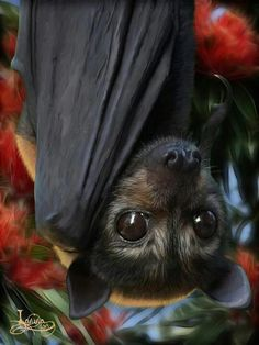 I dream of holding a bat one day!