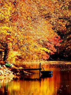 Falling For Fall! Enjoy the fall season. Beautiful World, Beautiful Places, Beautiful Pictures, Autumn Scenes, Seasons Of The Year, All Nature, Fall Pictures, Jolie Photo, Autumn Leaves