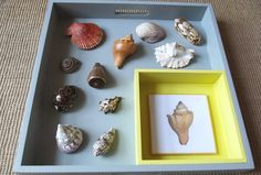 Sea Shell Matching to Card
