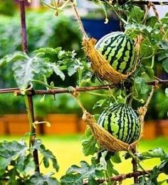 Garden Types 60 Easy to Try Vegetable Garden for Beginners Design Ideas . Garden Types 60 Easy to Try Vegetable Garden for Beginners Design Ideas Source by gardeningilimler. Garden Hammock, Backyard Garden Landscape, Backyard Vegetable Gardens, Vegetable Garden Design, Garden Landscaping, Vertical Vegetable Gardens, Gardening Vegetables, Growing Vegetables, Balcony Garden