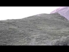 (VIDEO) A happy grizzly bear has fun rolling down a large hill in Denali National Park in Alaska. Grizzly Bear Cub, Bear Cubs, Bears, Cute Animals Puppies, Funny Animals, Animal Funnies, Gif Of The Day, Funny Animal Videos, Animal Pictures
