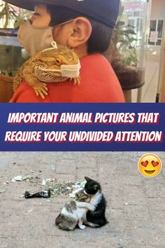 """""""#Important #Animal #Pictures #Require #Undivided #Attention """""""