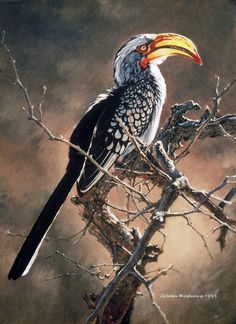 Animal Paintings – Page 16 – Johan Hoekstra Wildlife Art Collection Wildlife Paintings, Wildlife Art, Animal Paintings, Fantasy Landscape, Landscape Art, South African Birds, Africa Painting, Forest Illustration, Bird Drawings
