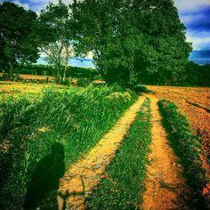 A vegades només necessitem desciar-nos 200 metres del camí habitual per descobrir veritables tresors amagats. #bike #bikeporn #btt #viesverdes #girona #costabrava #ciclismo #carrilet #pedaleando #forest #natura #instabike #picoftheday #photooftheday