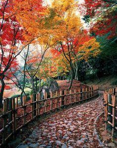 Os tons coloridos do outono no Japão - Made in Japan