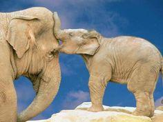 Funny Wildlife, Elephant Love III