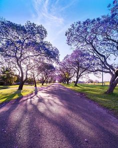 Grafton Nsw, Bleeding Heart Flower, Purple Trees, Pink Themes, Pretty Pictures, Garden Inspiration, Serenity, Natural Beauty, Nature Photography