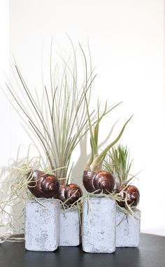 Beates-Kreative-Welten: Tillandsien/ Air Plants 4