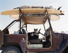 Im ready! Lets go! #jeep #surfer #dog