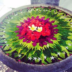 #offerings #ubud #bali Ubud Indonesia, Black Fig, Thailand, Philippines, Gili Island, Eat Your Heart Out, Bali Fashion, Tank Design, Paradise Island