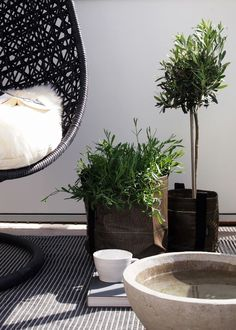 Buy Flowers Online Same Day Delivery Gorgeous Black Wicker Mini Olive Trees And White - Hitta Hem Balcony Inspiration 2012