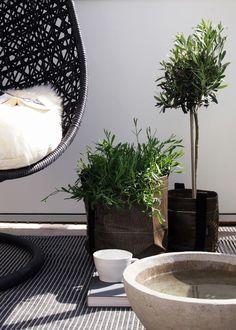 gorgeous black wicker mini olive trees and white - Hitta Hem | Balcony inspiration 2012