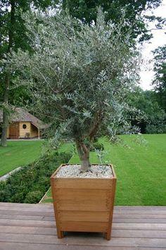 #olijfboom #houten #pot #bak Garden Pots, Potted Garden, Deco, Women's Fashion, Home, Google, Modern, Inspiration, Ideas