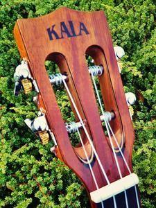 Image of Kala KA-ATP-CTG-CE Cedar/Acacia Slothead Cutaway Tenor Ukulele w/ EQ