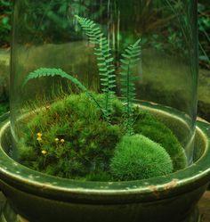 Moss-cloche-closeup.jpg 1,200×1,268 pixels