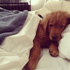 Pup who just doesn't want to get out of bed #adorable