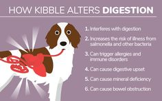 How #Kibble Alters #Digestion via #DogsNaturally #RawFeeding #Natural