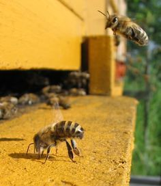 Opening the Hive Too Soon | Keeping Backyard Bees