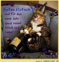 Happy New Year's Eve! So… was 2012 a good year for you? What do you expect out of I Love Cats, Cute Cats, Funny Cats, Funny Animals, Cute Animals, Funniest Animals, Happy New Year Funny, Happy New Years Eve, Funny Happy