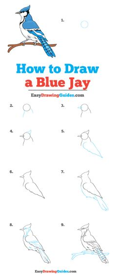 Learn to draw a Blue Jay. This step-by-step tutorial makes it easy. Kids and beginners alike can now draw a great looking Blue Jay. Pencil Drawings For Beginners, Beginner Sketches, Drawing Tutorials, Blue Drawings, Easy Drawings, Blending Colored Pencils, Birds For Kids, Blue Jay Bird, Drawing For Kids