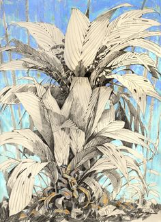 """Blue Light by Debby Kaspari, Norman Oklahoma - graphite drawing of a palm plant on tan paper.""""understory,"""" of sorts."""