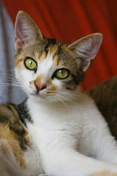 I think this kitty used eyeliner for her photoshoot!