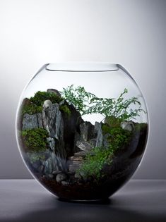 Beautiful Terrarium Ideas What Is A Terrarium? A terrarium is essentially an enclosed environment for growing plants. Succulent Terrarium, Succulents Garden, Planting Flowers, Terrarium Ideas, Terrarium Scene, Terrarium Centerpiece, Ikebana, Decoration Plante, Bottle Garden