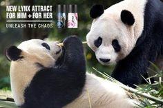 Lynx sponsors the video cameras on the pandas at Edinburgh Zoo