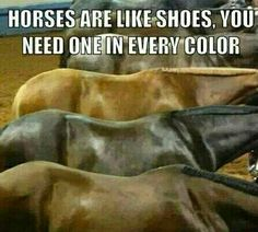 Horses are like shoes, you need one in every color