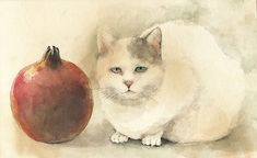 Midori Yamada Japanese) is a watercolorist and illustrator who is fond of cats and features them prominently in her works. Cats are primarily Pomegranate Art, Cat Allergies, Funky Art, Red Cat, Japanese Artists, Cat Drawing, Animal Paintings, Crazy Cats, Asian Art
