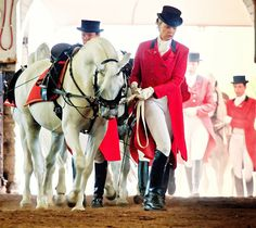 As seen at the Lipizzaner show at the Intel Core Launch in Johannesburg, South Africa. All The Pretty Horses, Beautiful Horses, Animals Beautiful, White Horses, Mini Horses, Spanish Riding School Vienna, Lippizaner, Horse Dance, Baroque