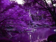 Purple Scenery With Zen Pond In Japanese Garden Purple Love, All Things Purple, Shades Of Purple, Purple Stuff, Deep Purple, Beautiful Landscapes, Beautiful Gardens, Portland Japanese Garden, Japanese Gardens