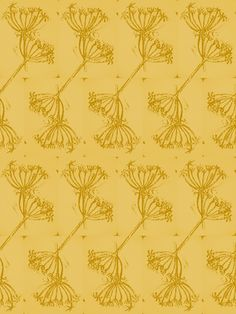 Queen Anne lace c.