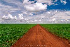 Dirt road through soy bean fields, Emas National Park, Brazil